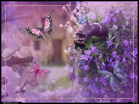 fleur papillon eau